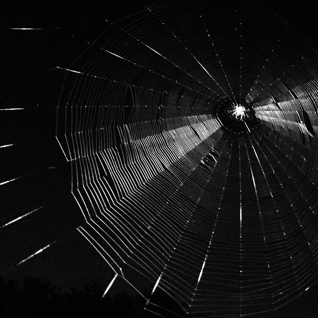 Web by Ryan Dickey