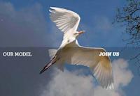 dispersed firm - bird